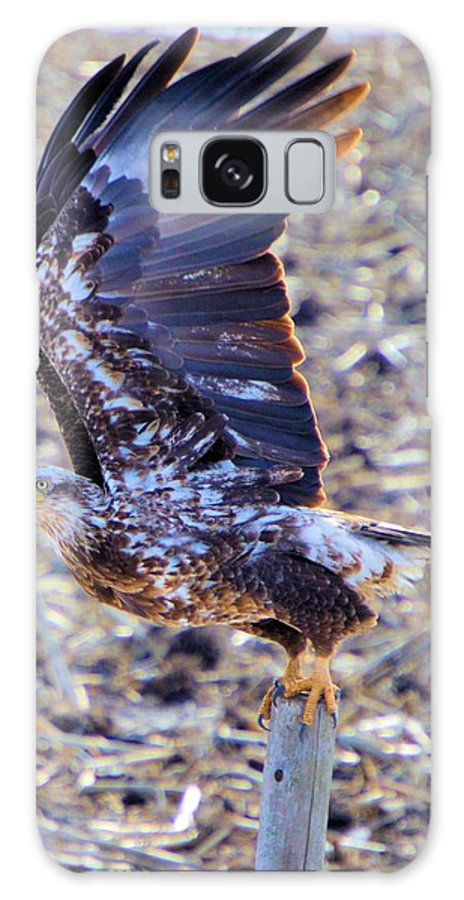 Bald Eagle Galaxy S8 Case featuring the photograph Posted by Bonfire Photography