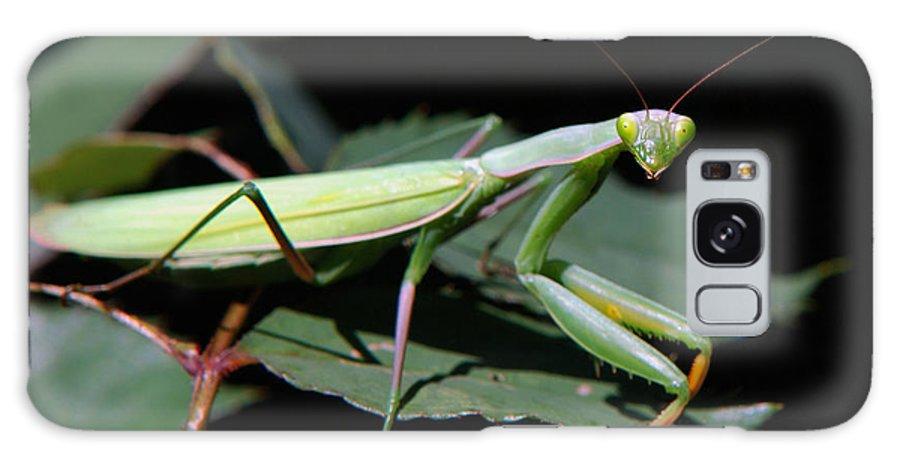 Praying Mantis Galaxy S8 Case featuring the photograph Praying Mantis by Christina Rollo