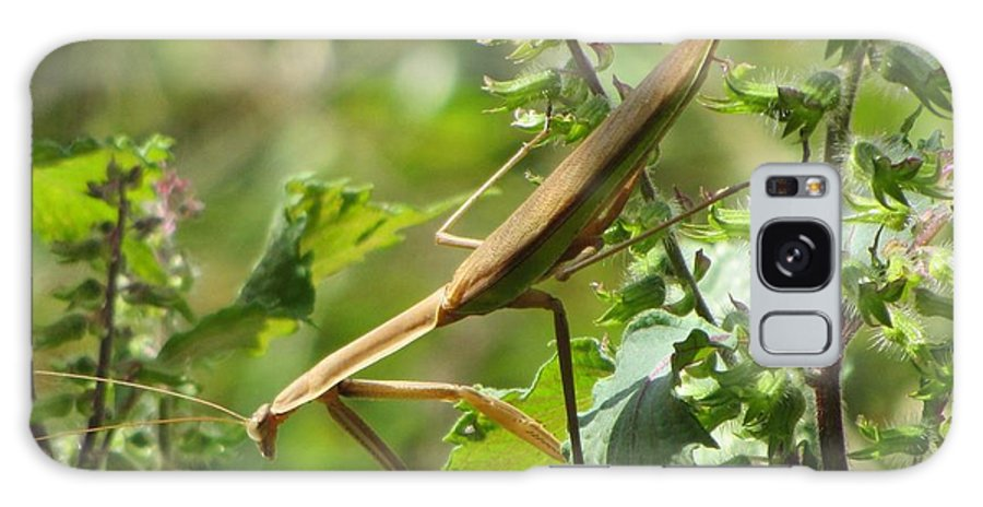 Insects Galaxy S8 Case featuring the photograph Praying Mantis by Christine Bradley