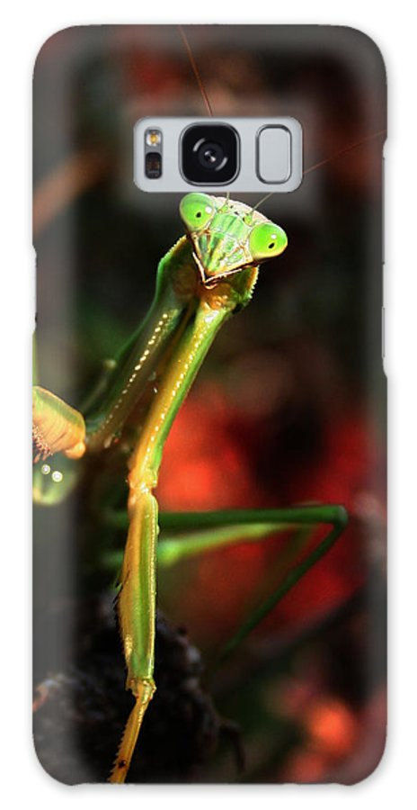 Praying Mantis Galaxy Case featuring the photograph Praying Mantis Portrait by Linda Sannuti