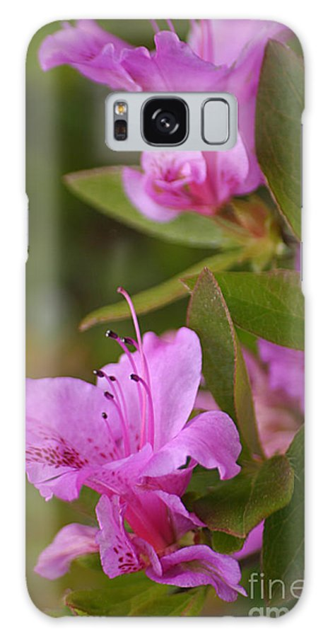 Rhododendron Galaxy S8 Case featuring the photograph Pretty Fuschia Rhododendron by Living Color Photography Lorraine Lynch
