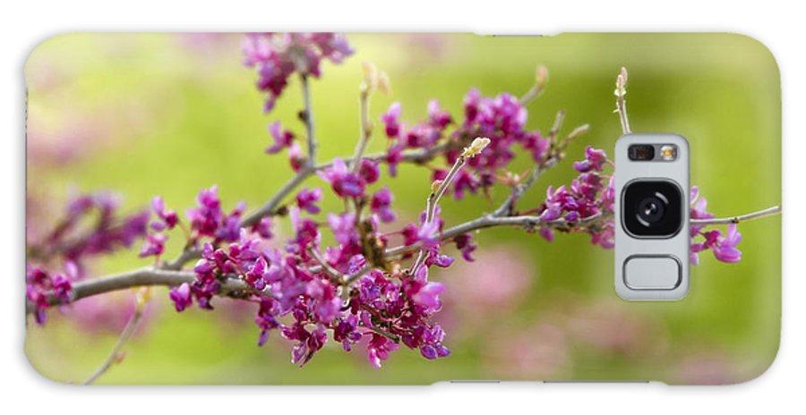 Pink Flowers Galaxy S8 Case featuring the photograph Pretty Little Pink Flowers by Saija Lehtonen