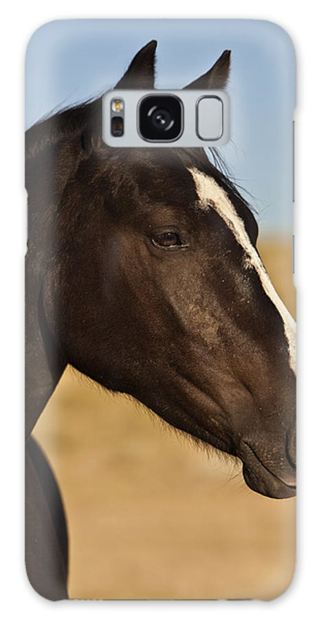 Horse Galaxy S8 Case featuring the photograph Pride by Jack Milchanowski