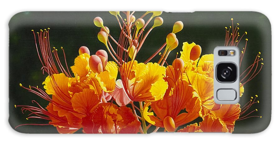 Floral Galaxy Case featuring the painting Pride Of Barbados by Gary Hernandez