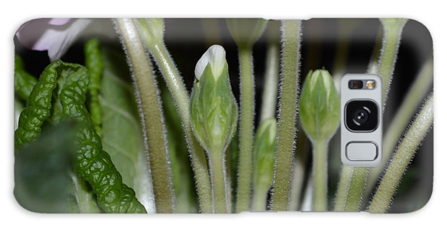 Spring Flower Galaxy S8 Case featuring the photograph Primeroses Steam And Buds by Felicia Tica