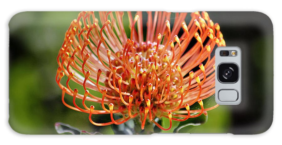 Protea Galaxy S8 Case featuring the photograph Protea - One Of The Oldest Flowers On Earth by Christine Till