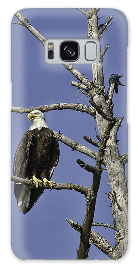 Bald Eagle Galaxy S8 Case featuring the photograph Proud To Be An American by Mark Harrington