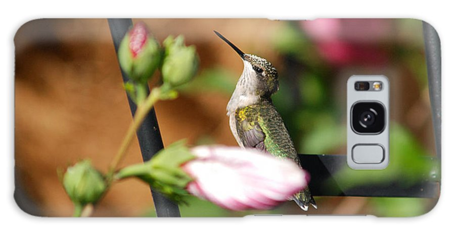 Birds Galaxy S8 Case featuring the photograph Proudful Little Hummingbird by Janice Adomeit