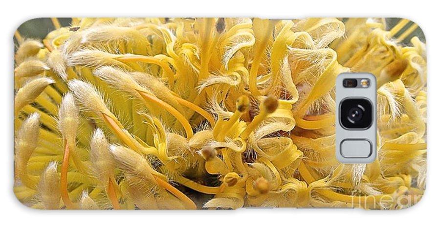 Maui Galaxy S8 Case featuring the photograph Wild Hairs Pua'ala Protea by Cheryl Cutler