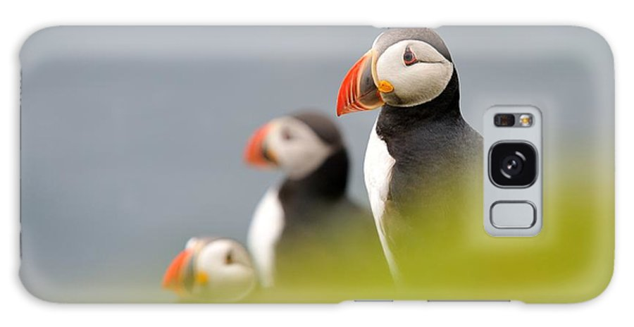 Fratercula Galaxy S8 Case featuring the photograph Puffins In Iceland by Erik Mandre