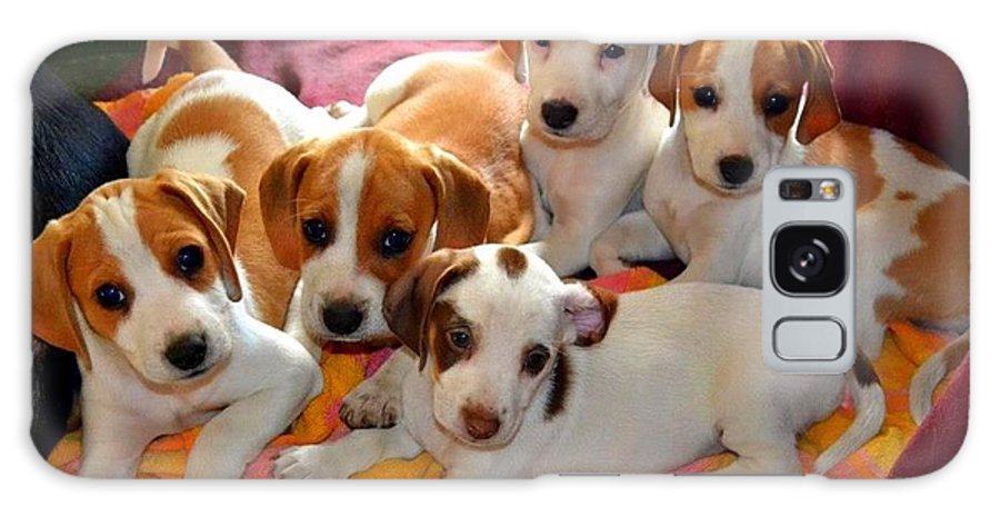 Puppies Galaxy S8 Case featuring the photograph Puppy Crew by Julie Vega