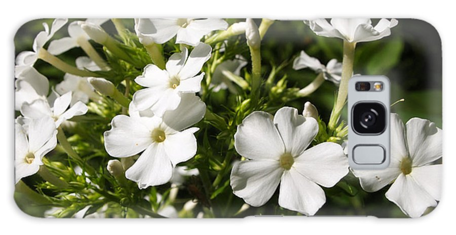 White Flower Photos Galaxy S8 Case featuring the photograph Pure And Simple Elegance by Deborah Fay