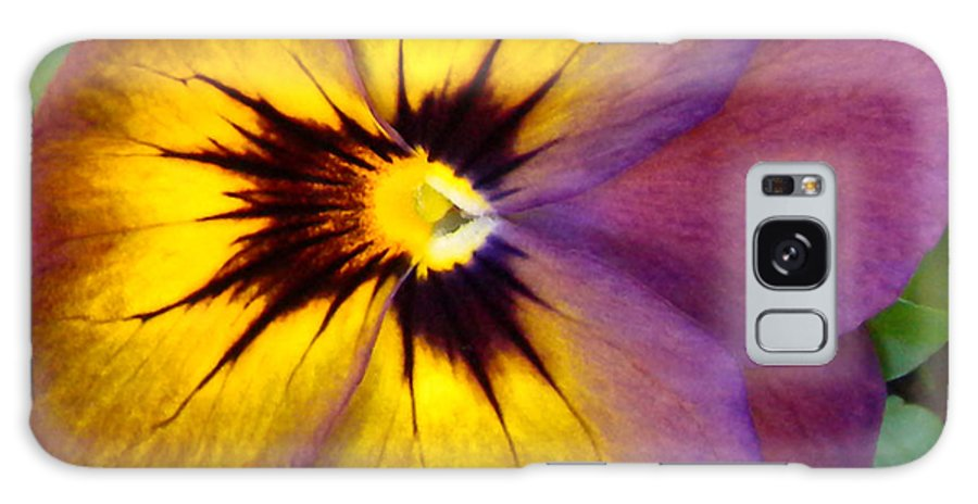 Purple Galaxy S8 Case featuring the photograph Purple And Yellow Viola by Brenda Parent