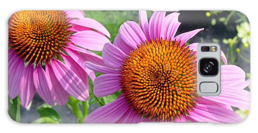Flower Galaxy S8 Case featuring the photograph Purple Coneflowers by Suzanne Gaff