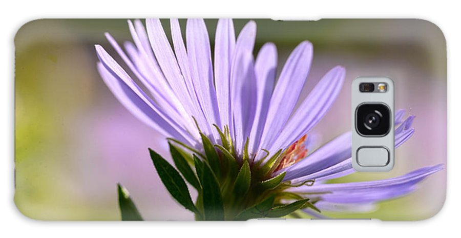 Purple Green Garden Flower White Orange Galaxy S8 Case featuring the photograph Purple Flower by Jessica Patton