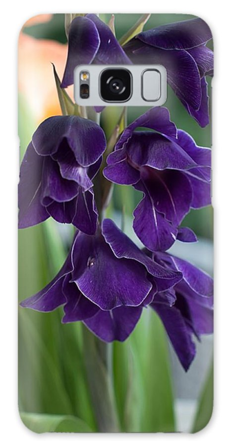 Flower Galaxy S8 Case featuring the photograph Purple Gladioli by Frank Gaertner