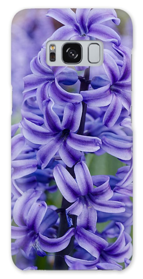 Spring Galaxy S8 Case featuring the photograph Purple Hyacinth by Tikvah's Hope