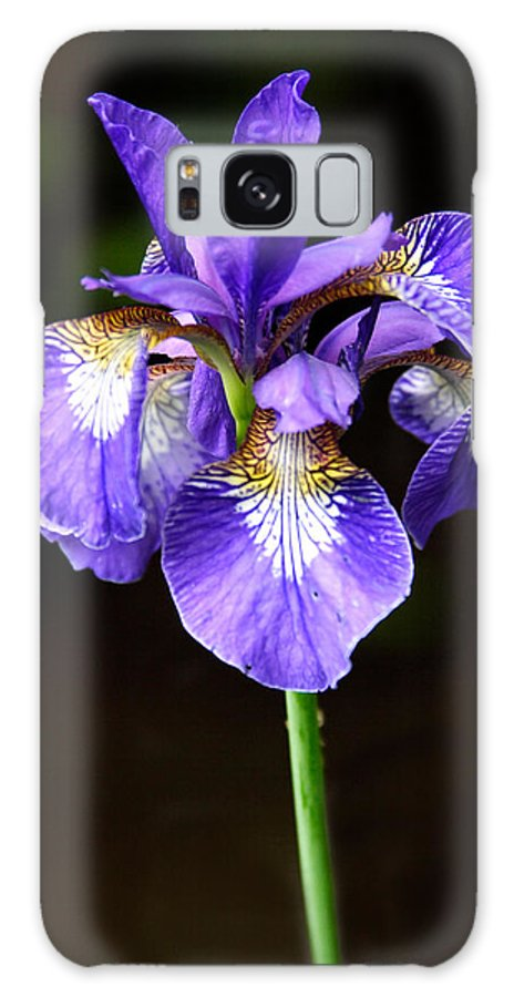 3scape Galaxy Case featuring the photograph Purple Iris by Adam Romanowicz