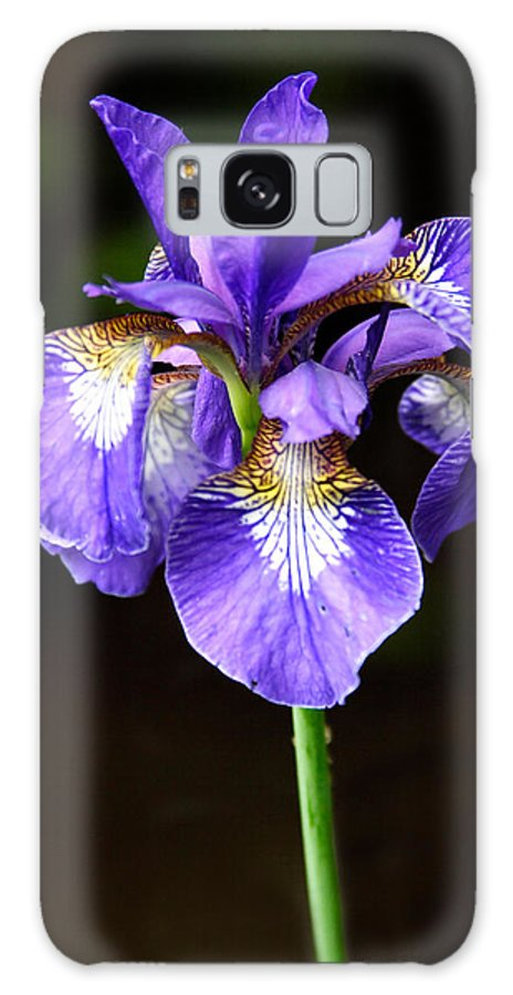3scape Galaxy S8 Case featuring the photograph Purple Iris by Adam Romanowicz