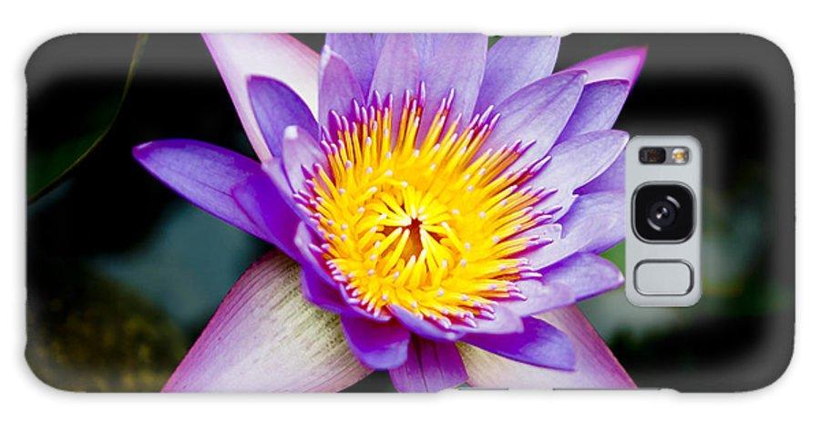 Flowers Galaxy S8 Case featuring the photograph Purple Lotus by Raimond Klavins