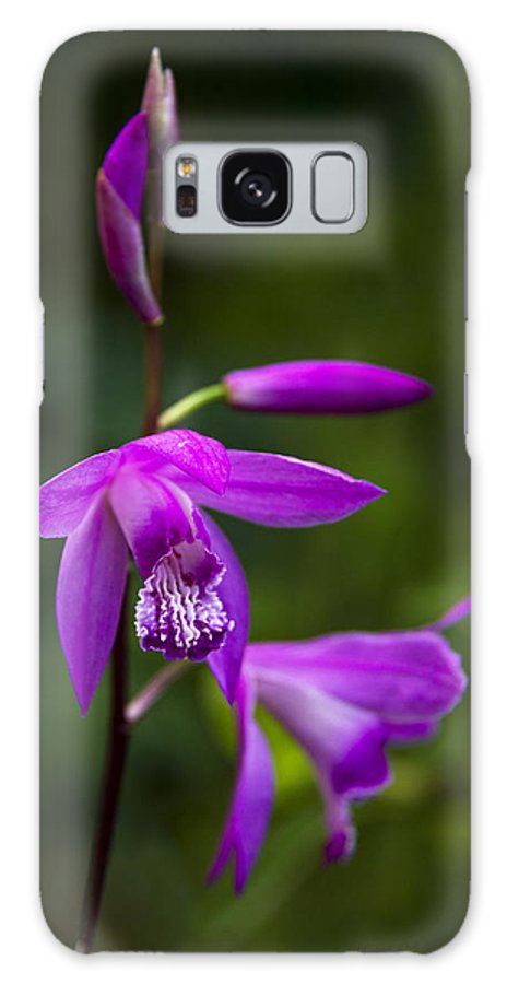 Orchid Galaxy S8 Case featuring the photograph Purple Orchid by Raffaella Lunelli