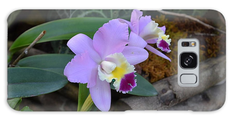Orchids Galaxy S8 Case featuring the photograph Purple Orchids by William Hallett