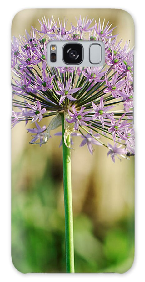Purple Galaxy S8 Case featuring the photograph Purple Perfection by Charles Feagans