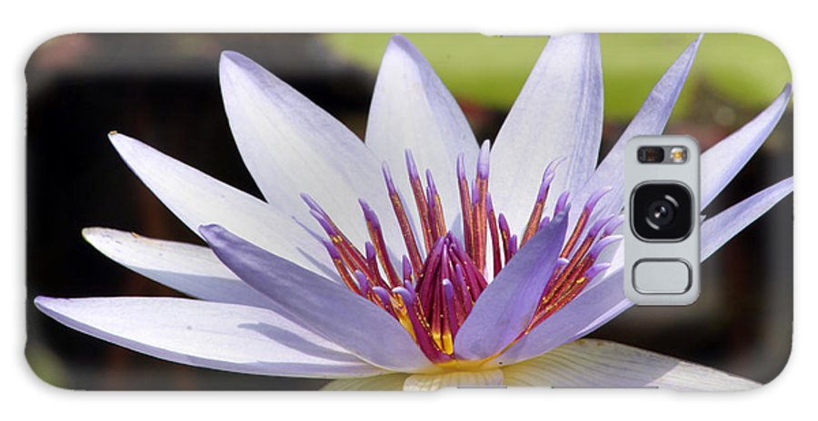 Waterlily Galaxy S8 Case featuring the photograph Purple Rhonda Kay Waterlily Above The Pond by Darleen Stry