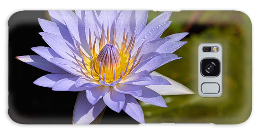 Purple Water Lilypad Lily Yellow Flower Green Galaxy S8 Case featuring the photograph Purple Water Lily 2 by Patton Imagery