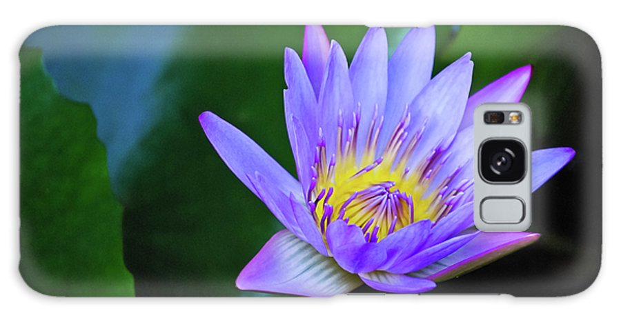 Hawaii Galaxy S8 Case featuring the photograph Purple Water Lily by Christi Kraft