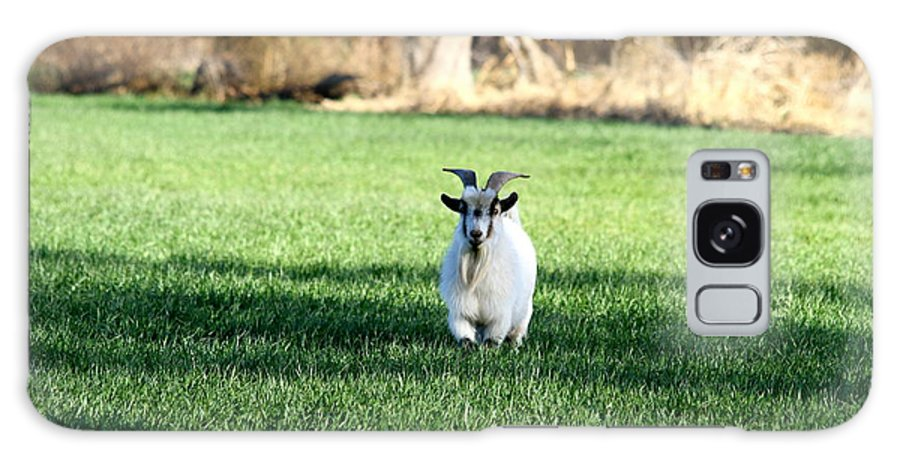 Pygmy Goat Galaxy S8 Case featuring the photograph Pygmy Goat by Krista Wimmer