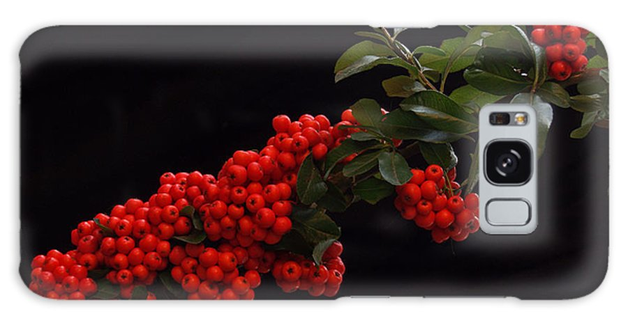 Winter Galaxy S8 Case featuring the photograph Pyracantha Berries On Black - Pennsylvania by Anna Lisa Yoder