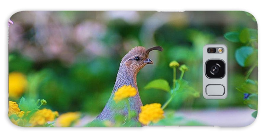 Quail Galaxy S8 Case featuring the photograph Quail In A Garden by Richard Jenkins