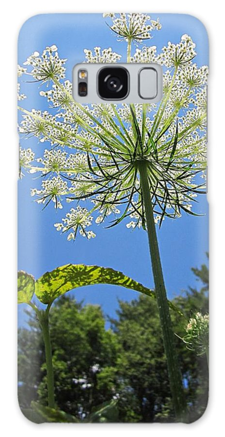 Queen Anne's Lace Galaxy S8 Case featuring the photograph Queen Anne's Lace by MTBobbins Photography