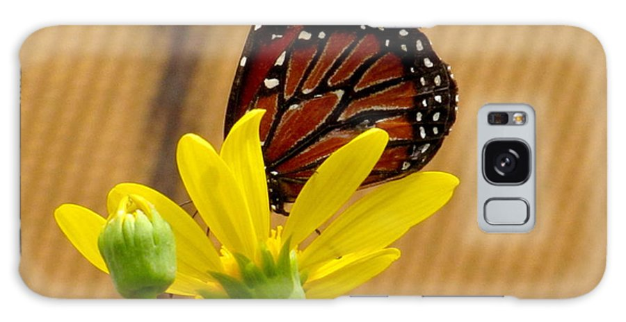 Queen Butterfly Galaxy S8 Case featuring the photograph Queen Butterfly by Marilyn Smith