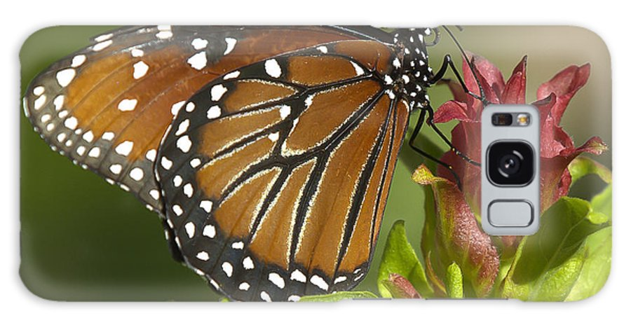 Butterfly Galaxy S8 Case featuring the photograph Queen Butterfly by Sean Allen