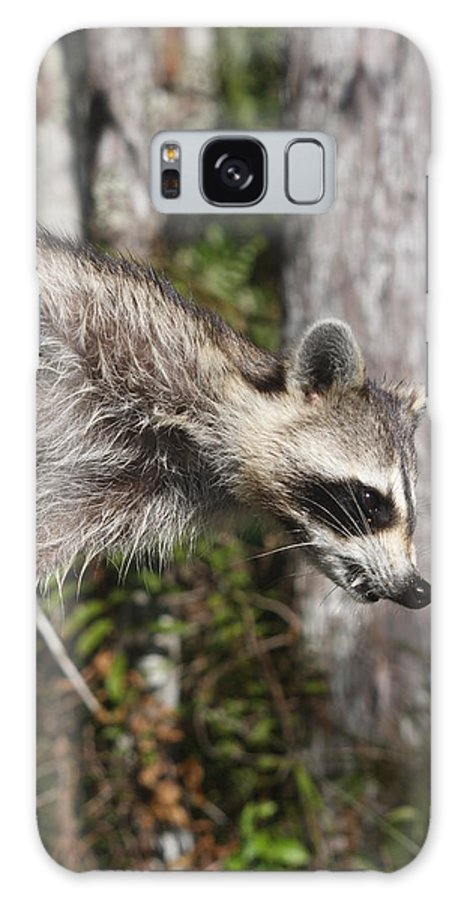 Raccoon Galaxy S8 Case featuring the photograph Raccoon by Christiane Schulze Art And Photography