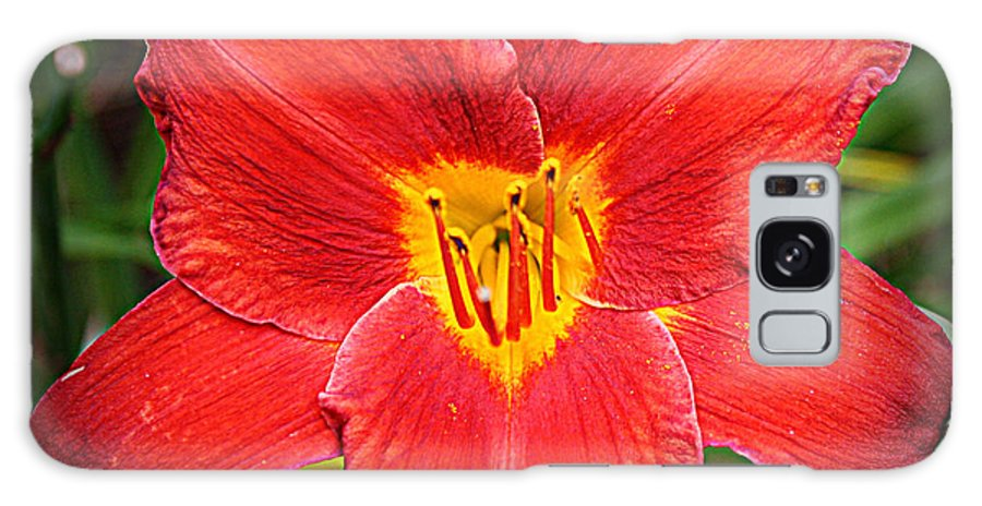 Daylily Galaxy S8 Case featuring the photograph Radiant In Red - Daylily by Dora Sofia Caputo Photographic Design and Fine Art