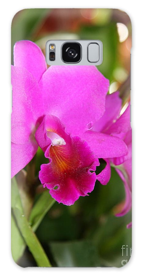 Orchid Galaxy S8 Case featuring the photograph Radiant Pink by Christiane Schulze Art And Photography
