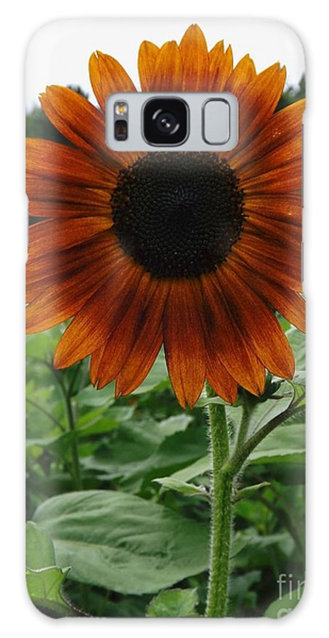 Sun Flower Galaxy S8 Case featuring the photograph Radiant Sunflower by Gerald Strine