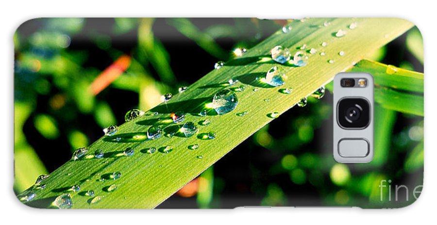 Rain Galaxy S8 Case featuring the photograph Rain Blade by Beth Ferris Sale