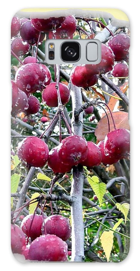 Rain On The Crab Apples Galaxy S8 Case featuring the photograph Rain On The Crab Apples by Will Borden
