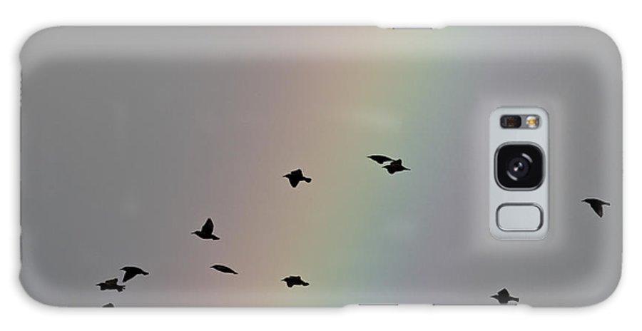 Birds Galaxy S8 Case featuring the photograph Rainbow Birds by Simon Gregory