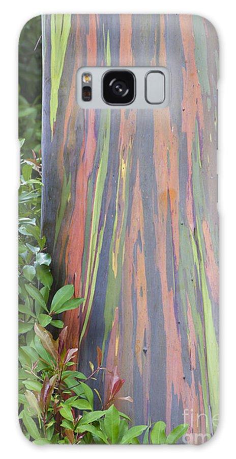 Hawaii Galaxy S8 Case featuring the photograph Rainbow Eucalyptus by Bryan Keil