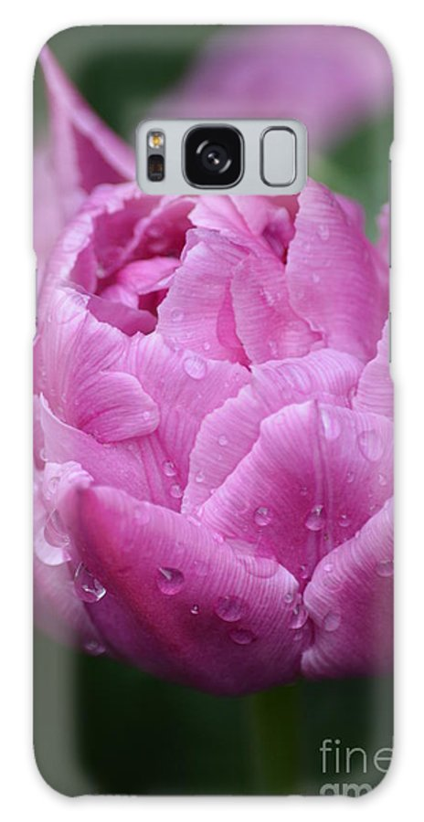 Purple Galaxy S8 Case featuring the photograph Raindrops On Tulips by Jan Noblitt