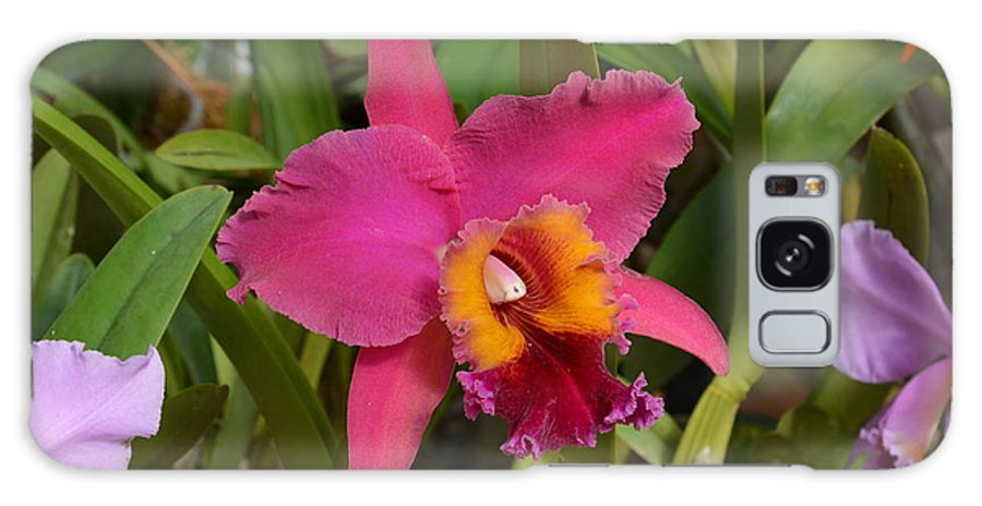 Orchid Galaxy S8 Case featuring the photograph Rare Beauty by William Hallett