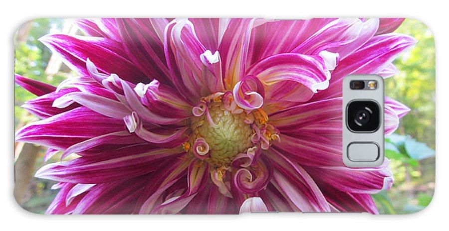 Flower Galaxy S8 Case featuring the photograph Raspberry Sundae Dahlia by Robert Speziale