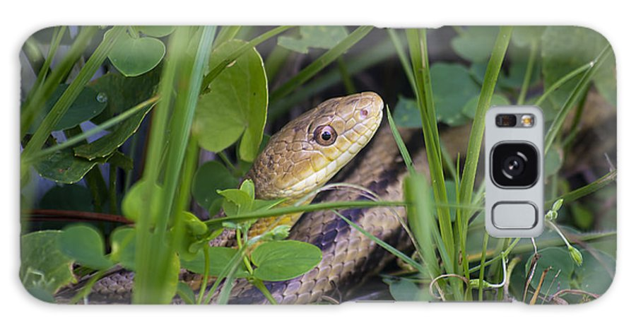 Wildlife Galaxy S8 Case featuring the photograph Ratsnake by Kenneth Albin