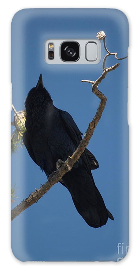 Raven Galaxy S8 Case featuring the photograph Raven by Jacklyn Duryea Fraizer