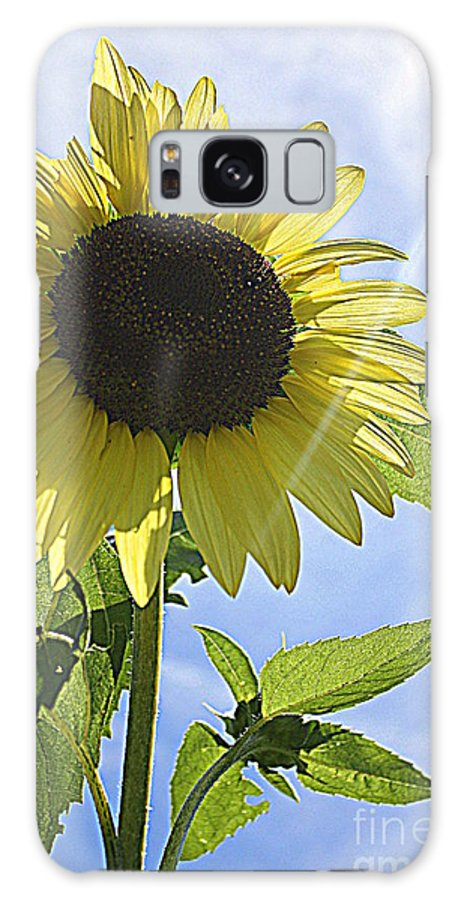 Sunflowerfield Galaxy S8 Case featuring the photograph Reaching For The Sun by Dora Sofia Caputo Photographic Design and Fine Art